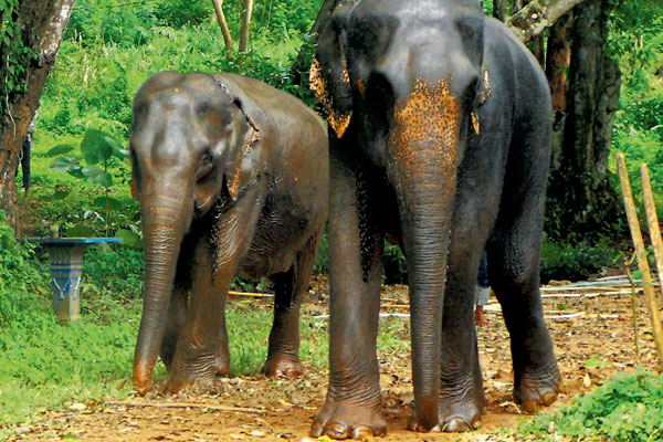 Travel firms collaborate to combat illegal wildlife trade