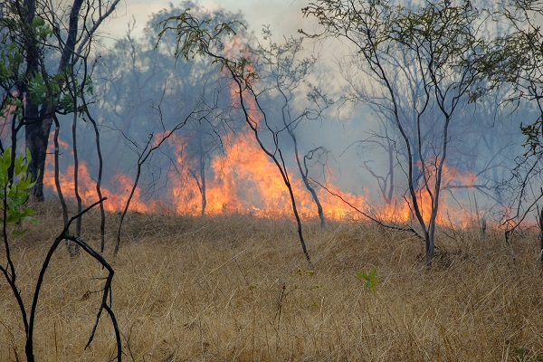 At least 12 dead as Australian bushfires spread