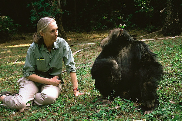 G Adventures bolsters Jane Goodall Collection