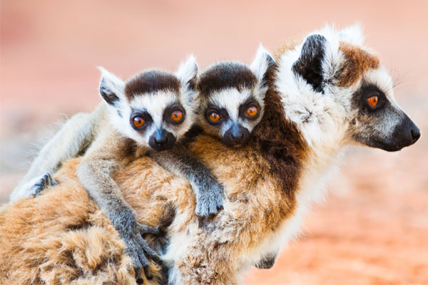 Exploring Madagascar's unique flora and fauna on a road trip