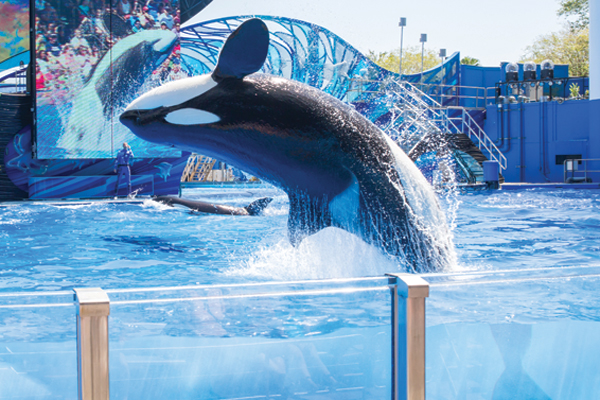 SeaWorld boss condemns BA Holidays over wildlife attractions ban