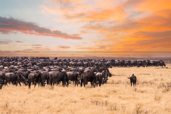 Once-in-a-lifetime safari trips to look forward to