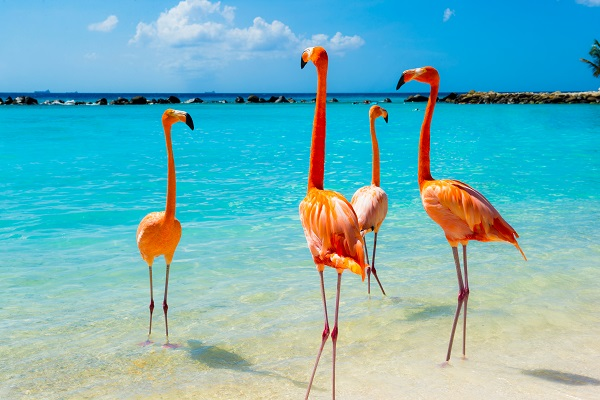Aruba added to travel corridors list