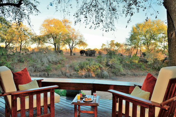 Saga safari adventure offers 11 game drives