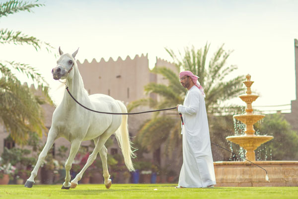 Experience the natural beauty and culture of Ajman