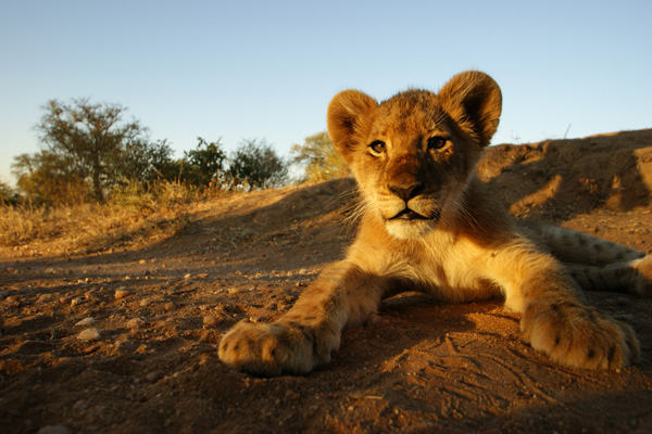 Shearings showcases safaris with Lion King toolkit
