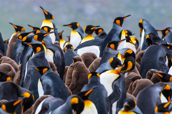 Adventure and wildlife in Antarctica on G Expedition