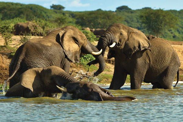 Experience the wild side of Uganda