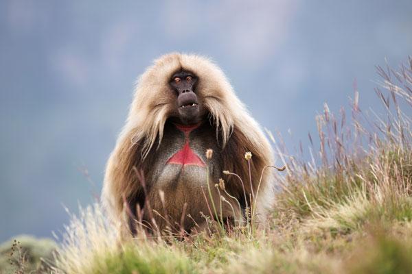 Exploring Ethiopia's wildlife and ancient monuments