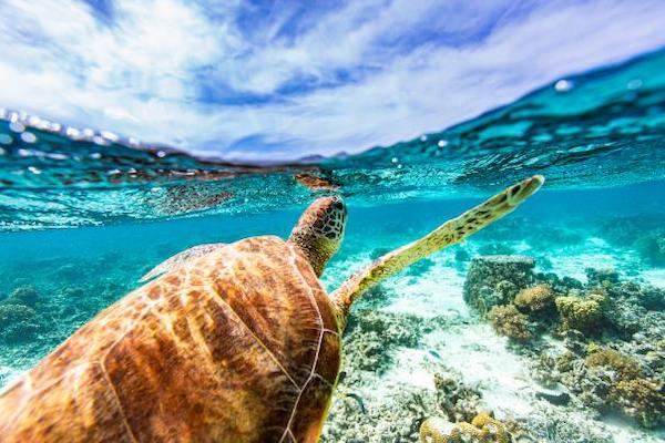 Sandals highlights conservation efforts on World Oceans Day