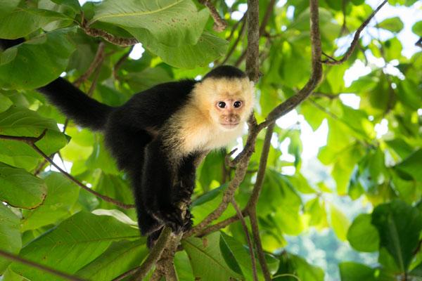 Six of the best wildlife-spotting holidays around the world